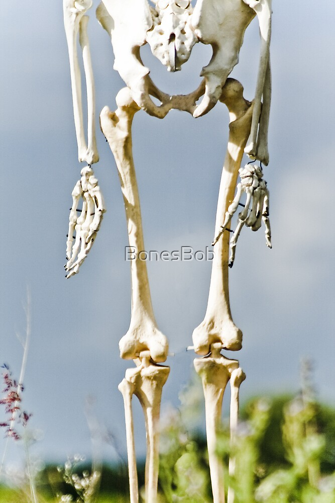 Dangling in the Wind by BonesBob