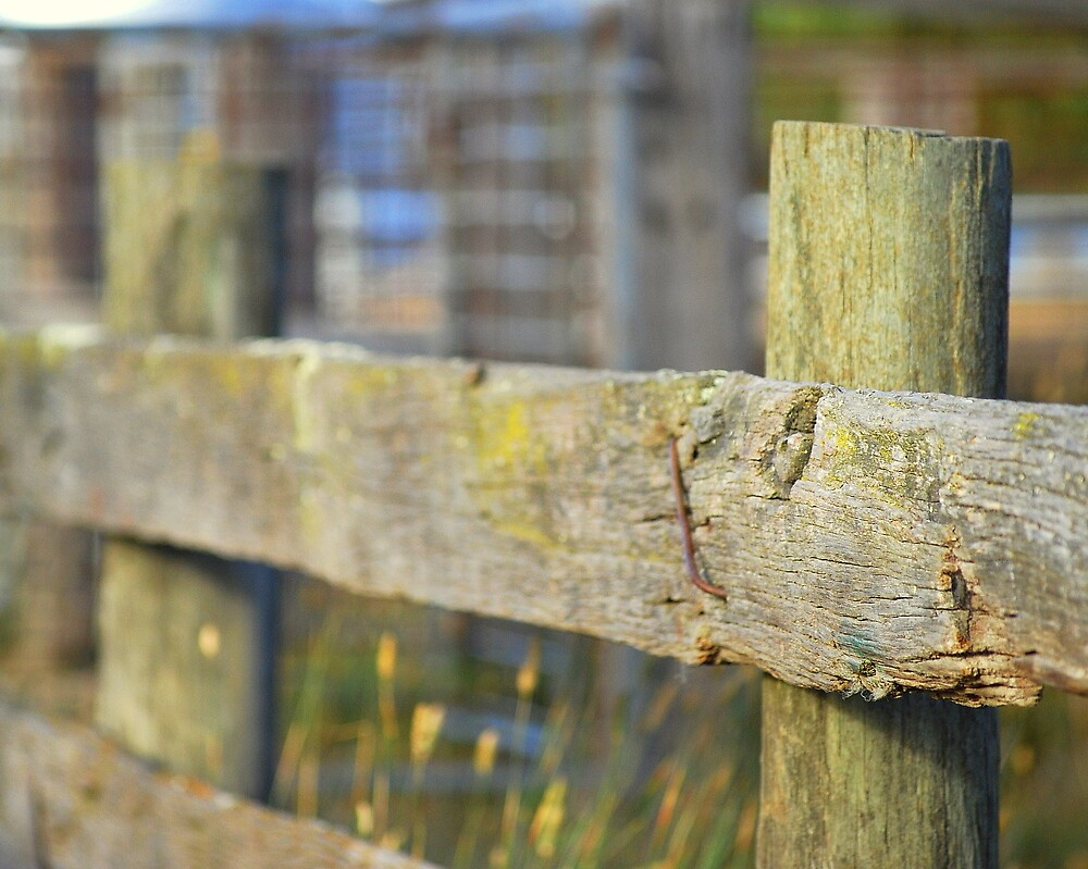 Cattle Fence by cameron meggs