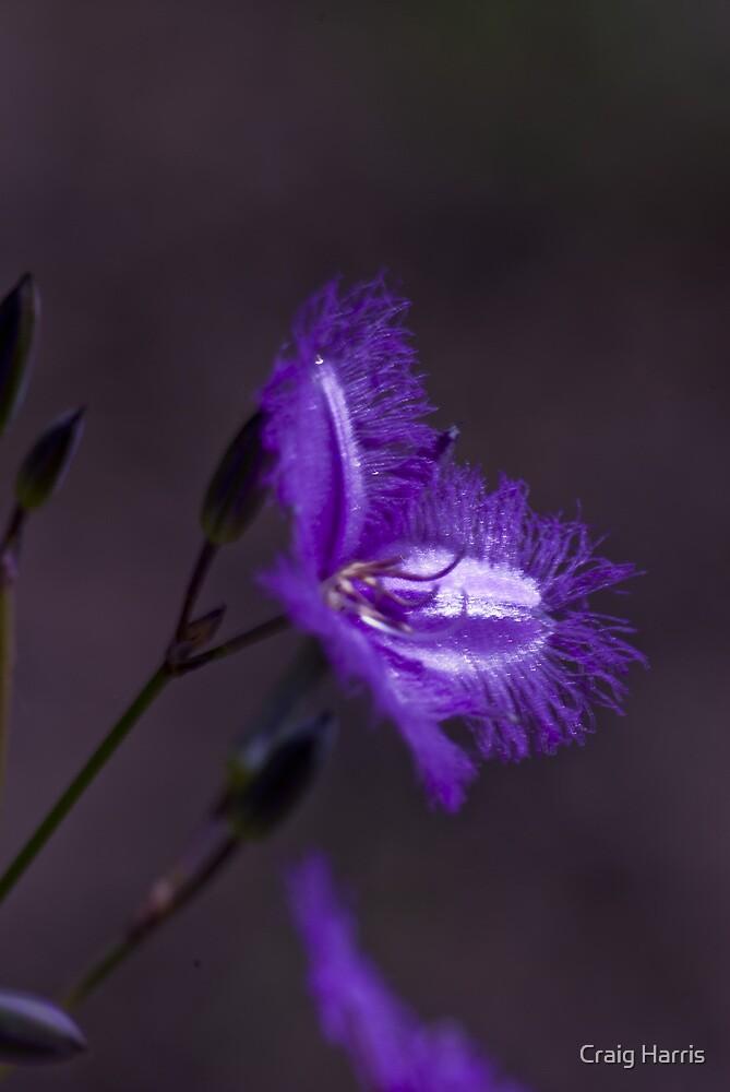 Purple by Craig Harris
