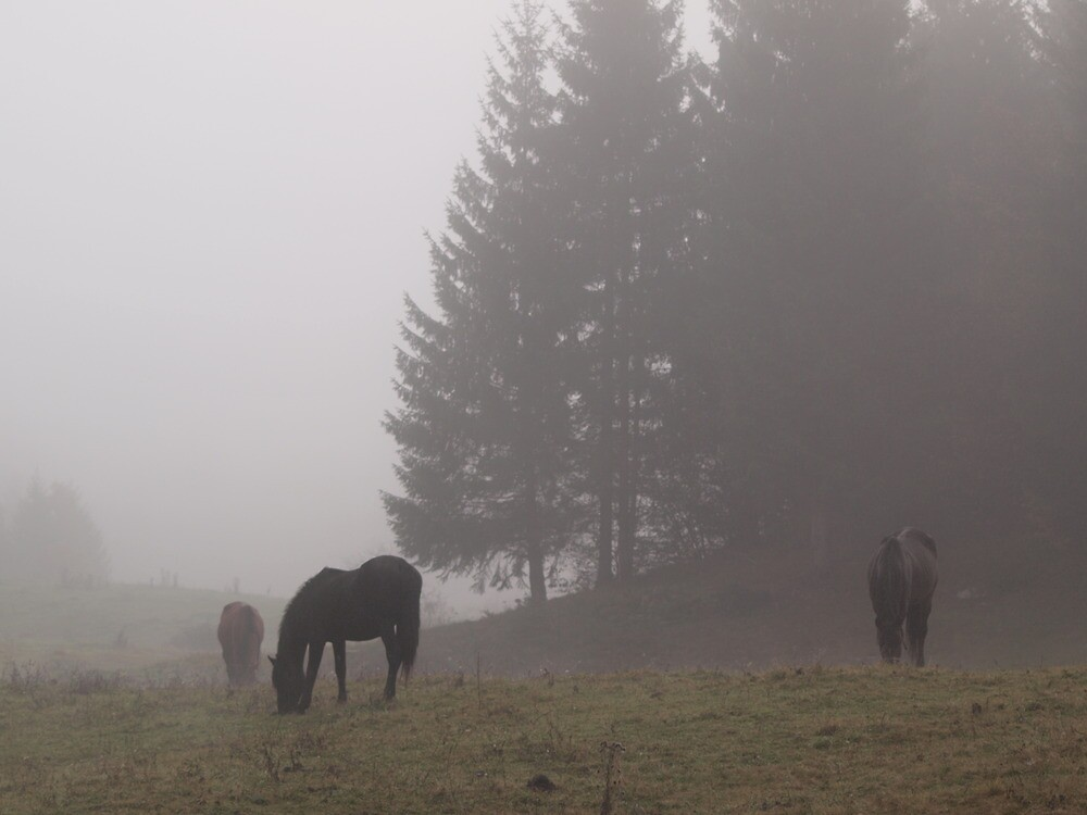 Silent autumn by primozomirp
