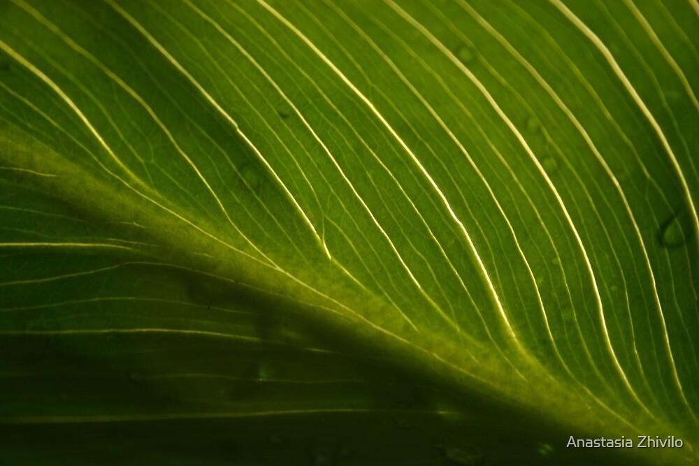 Nature's lines by Anastasia Zhivilo