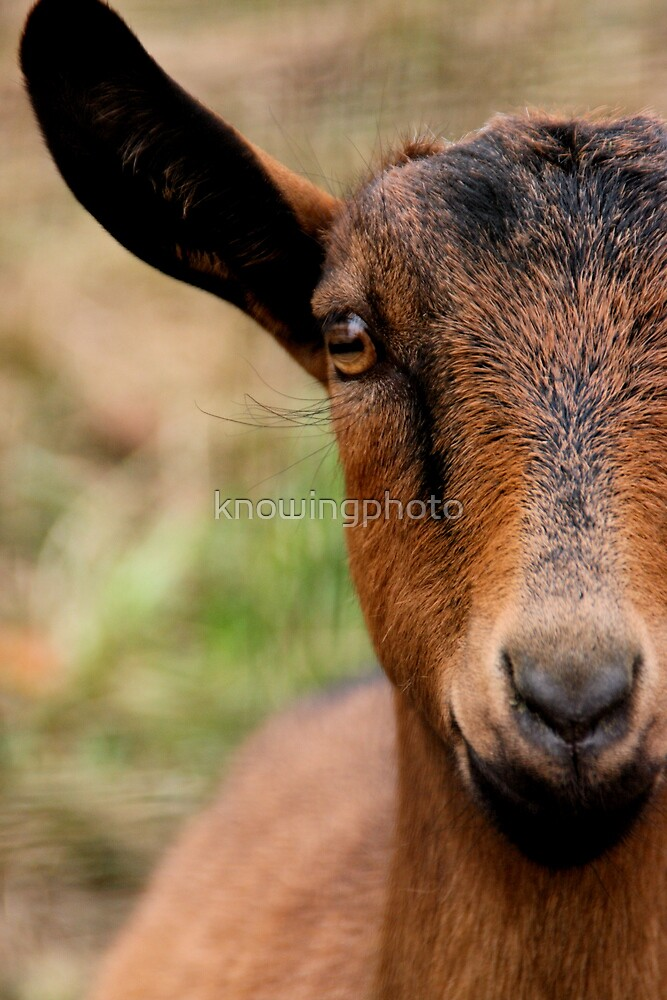 Brown Eyes by knowingphoto