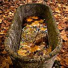 Wild tub by Inés Montenegro