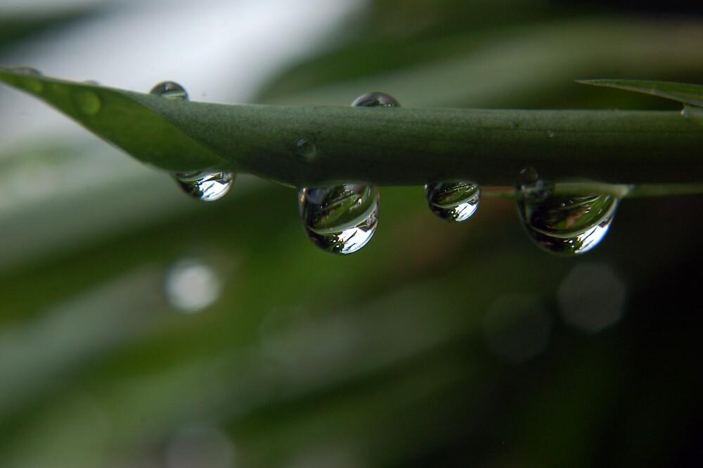 Droplets by Lawrence Crisostomo