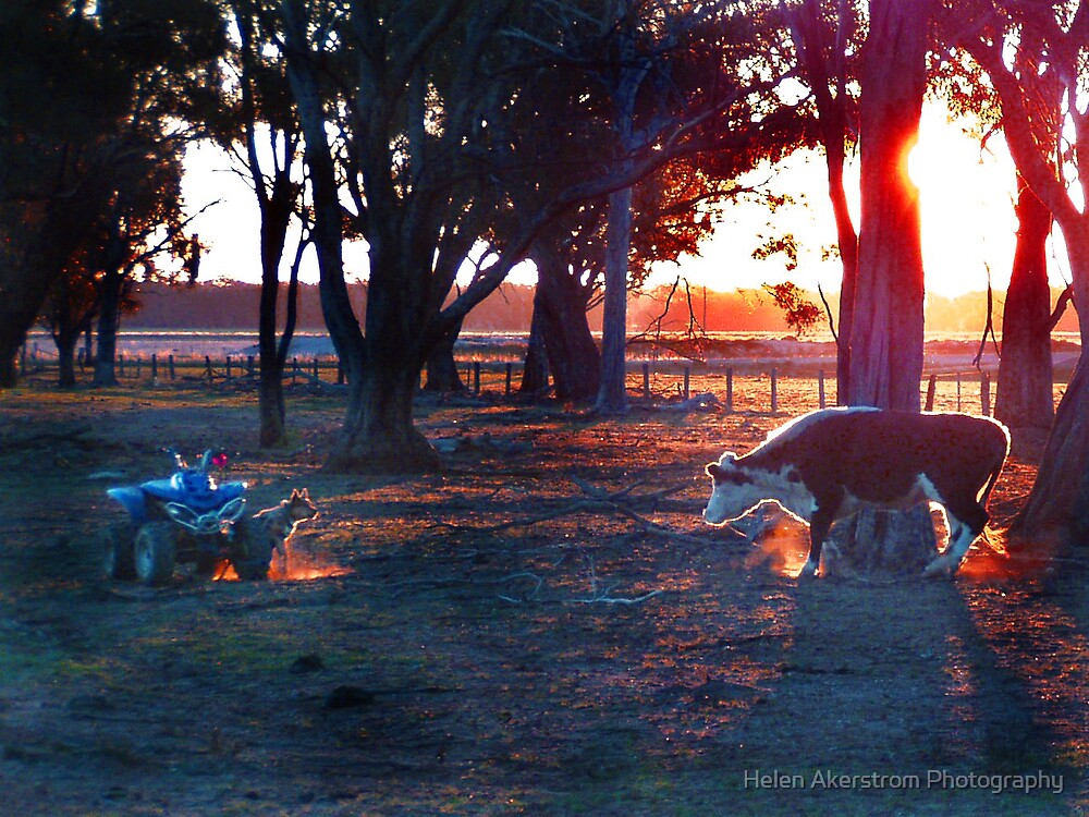 SUNSET STAND OFF! by Helen Akerstrom Photography