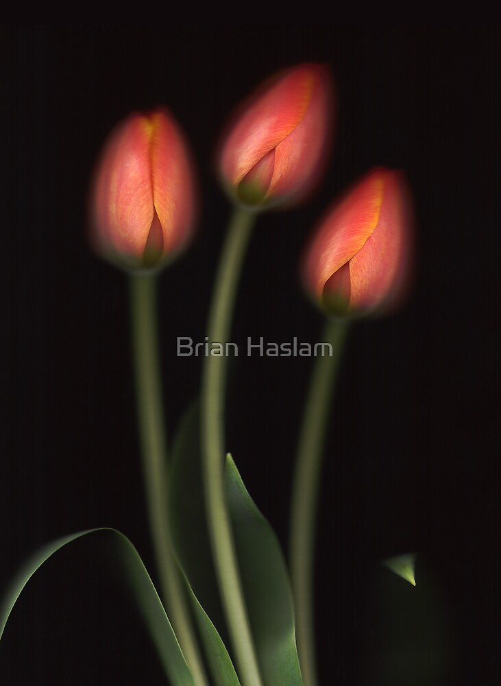 Ad Rem by Brian Haslam