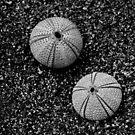 Sea urchin by Mitch  McFarlane