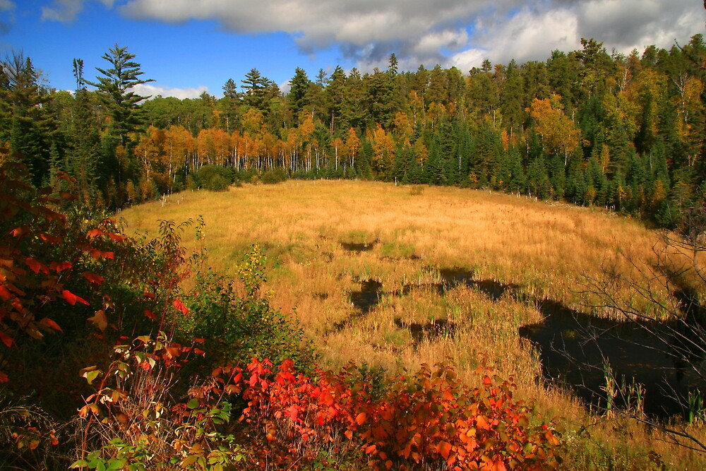 """ Boreal Meadow  "" by fortner"