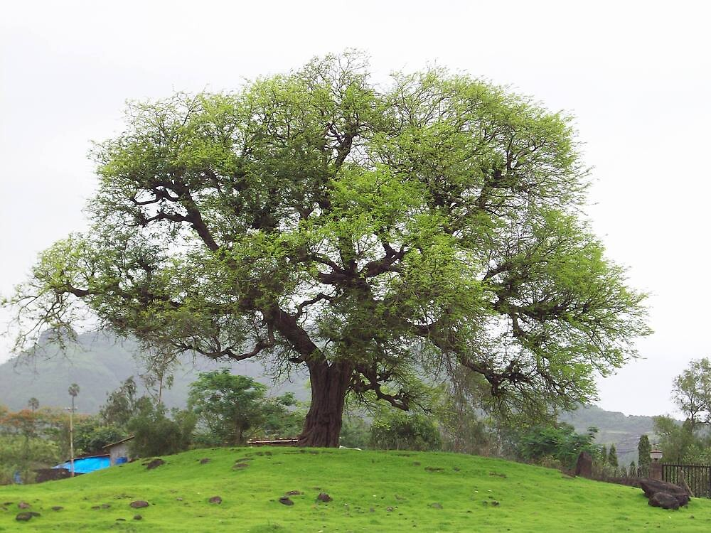 Tree with a good shape by shandar26