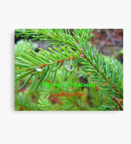 Spruce Bow, Rain Drop ,Christmas Card Canvas Print