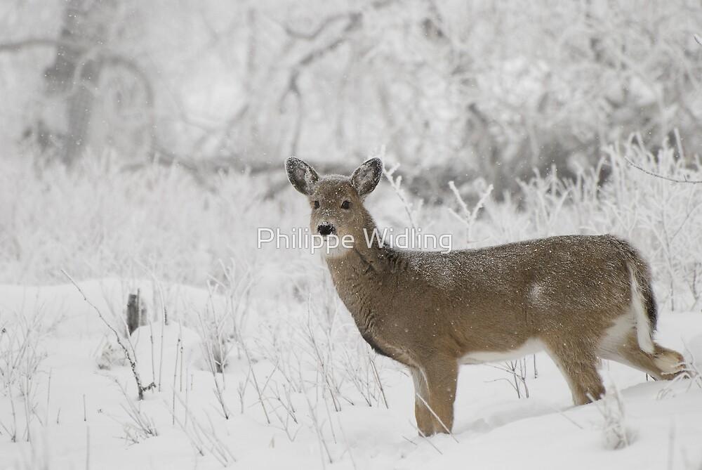 Deer in snow. by Philippe Widling