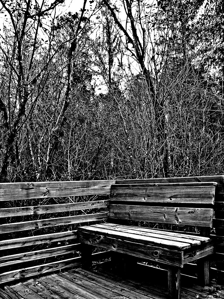 Have A Seat - Lettuce Lake Park by caitlin23
