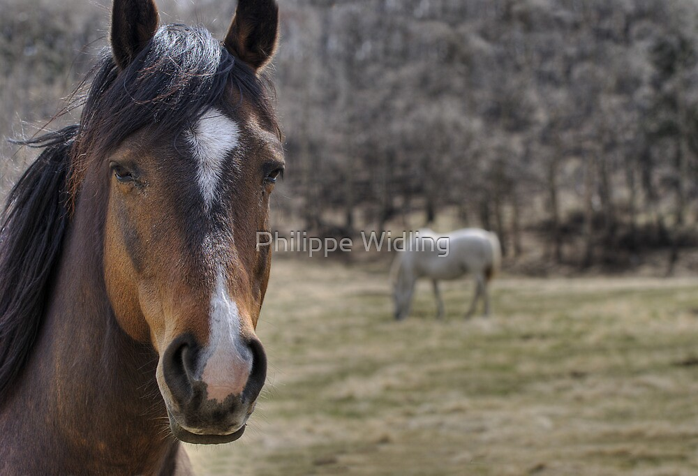 Curious Horse by Philippe Widling