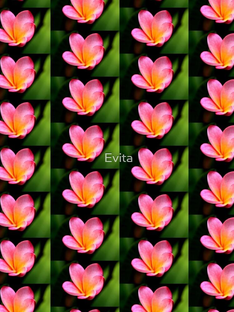 Frangipani im Rosa von Evita