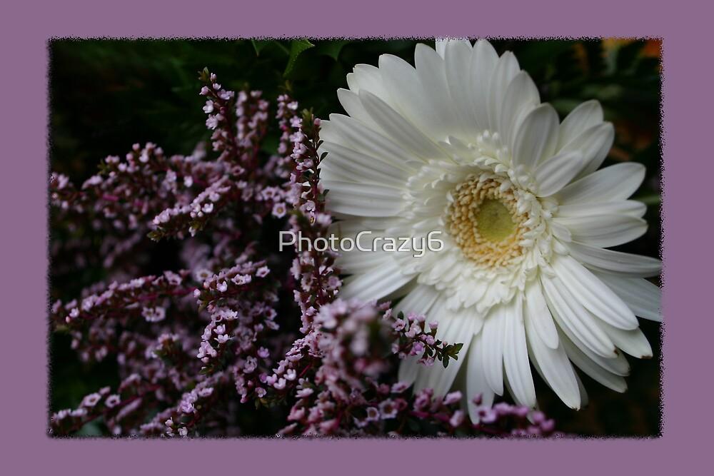 White gerbera daisy flower by PhotoCrazy6