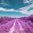 Dirt road to nowhere by Adam Nixon