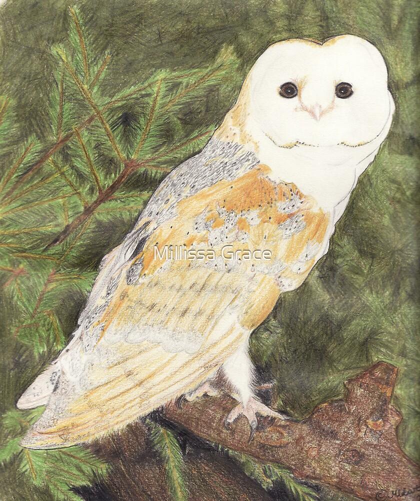Barn Owl by Millissa Grace