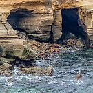 La Jolla Cove is a small, picturesque cove and beach that is surrounded by cliffs in La Jolla, San Diego, California,  by PhotoStock-Isra