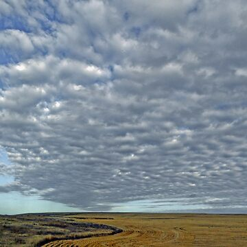 GRASSLANDS AS FAR AS I CAN SEE by elainebawden