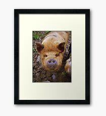 Bat Pig Framed Print