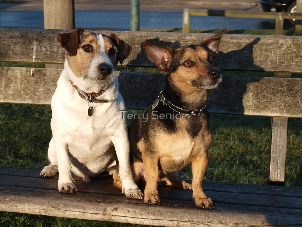Jake & Charlie on an evening out by Terry Senior