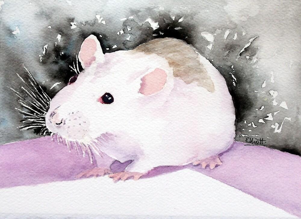 Star, the fancy rat. by Pat  Elliott