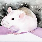 Star, the fancy rat. by Pat  Elliott