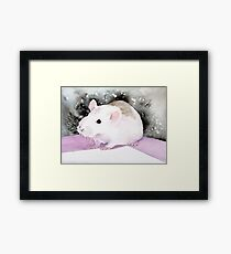 Star, the fancy rat. Framed Print