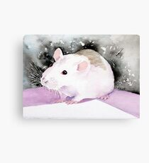 Star, the fancy rat. Canvas Print
