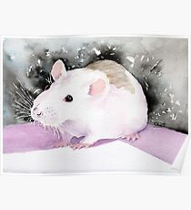 Star, the fancy rat. Poster