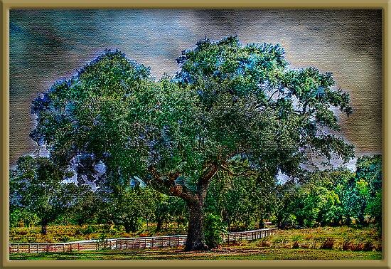 The Ole Oak Tree by glink