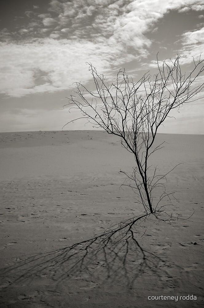 Lonely in the Desert by courteney rodda