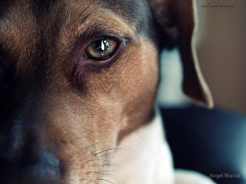 poker's eye by Angel Warda