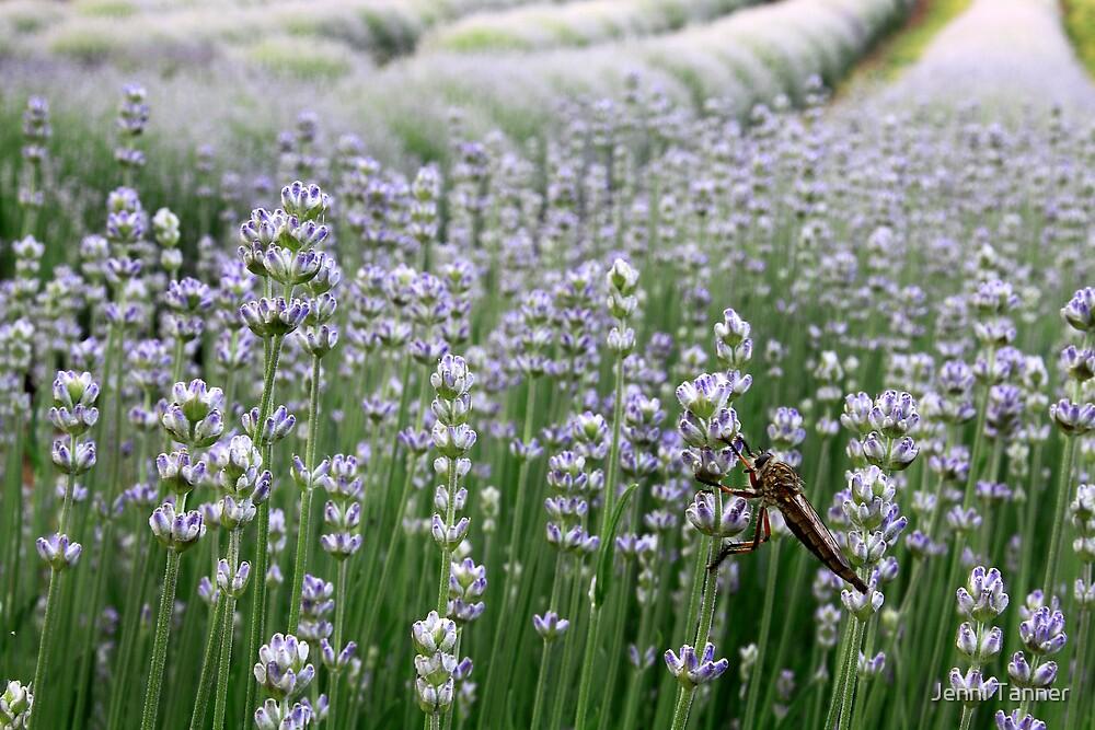 Lavender Landing by Jenni Tanner