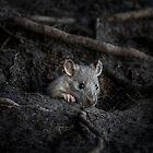 Cute Rat by Sara Sadler