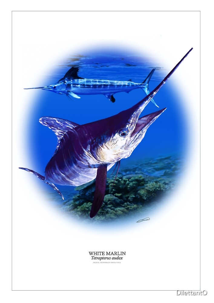 WHITE MARLIN POSTER 2 by DilettantO