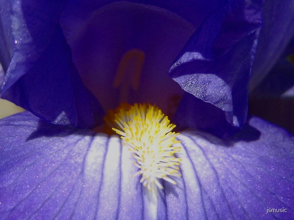 Bearded iris by jsmusic