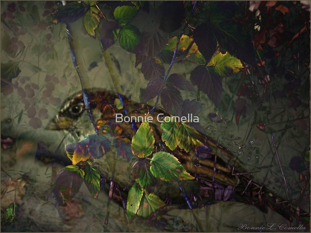 Autum in November by Bonnie Comella