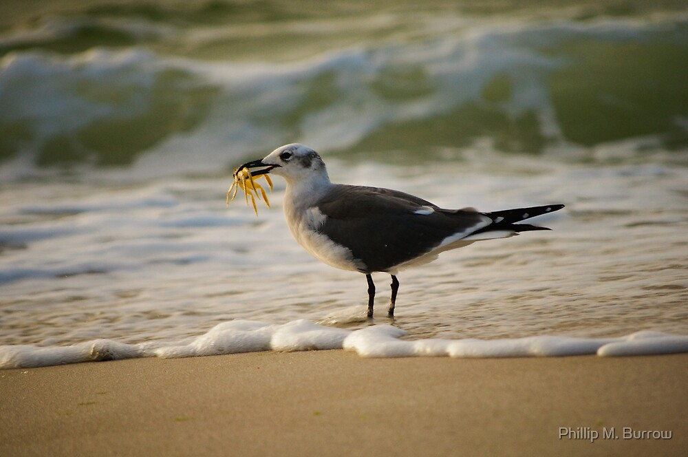 Seafood Breakfast by Phillip M. Burrow