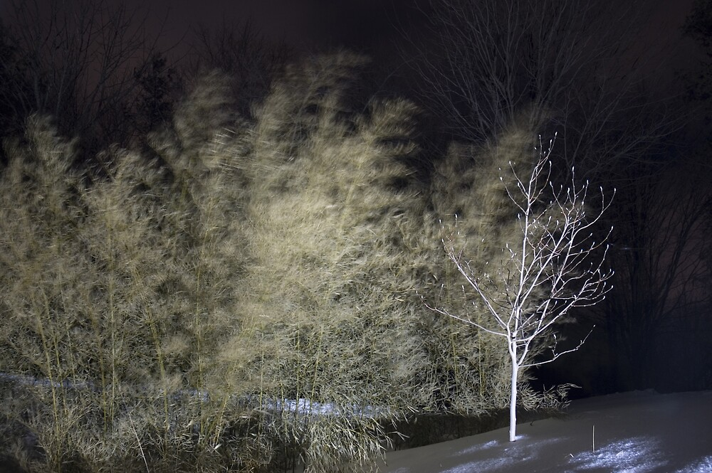Winters Whisper by John  Wood