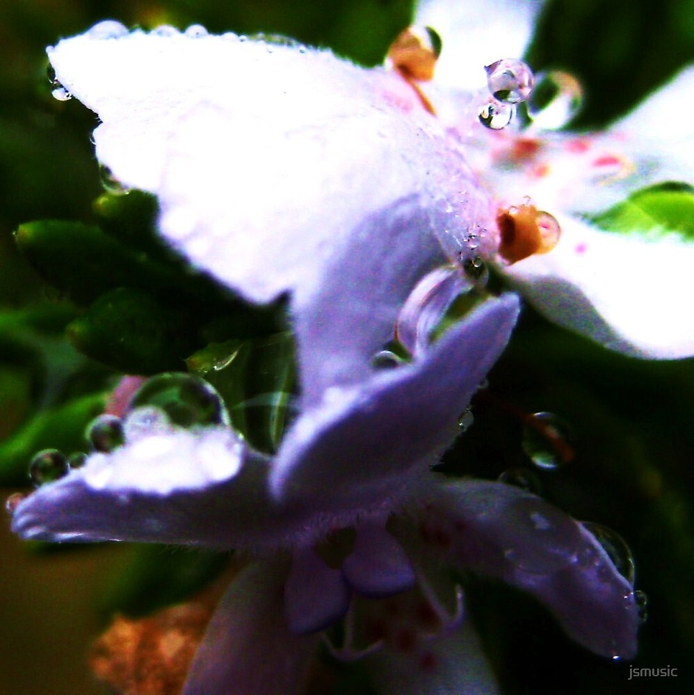 Raindrops on Rosemary by jsmusic