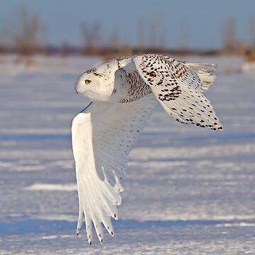 Snowy Owl by darby8