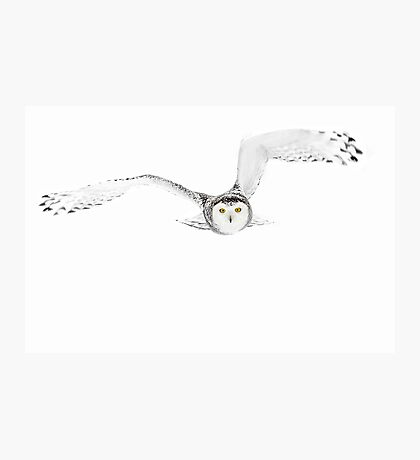 Eyes on the prize - Snowy Owl Photographic Print