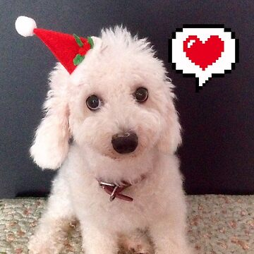 Merry Christmas from cute poodle by Kathryn8