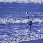 Great Blue Heron by Debby Pueschel