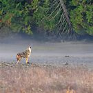 Coyote Serenade by Tracy Riddell
