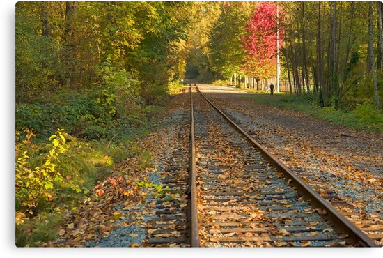 Autumn Tracks by Tracy Riddell