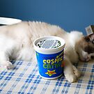Too Much Catnip...Out Cold on Kitchen Table!! by Carol Clifford