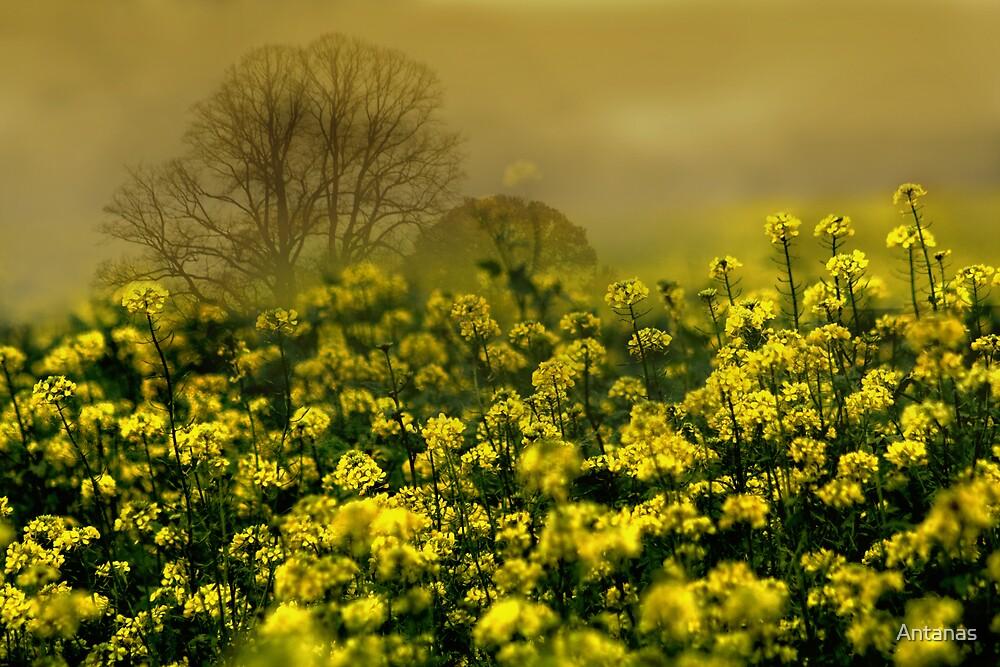 Smell (Belgium) by Antanas