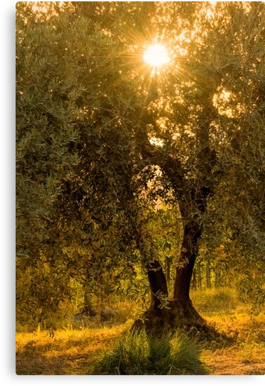 Olive Tree by Tracy Riddell